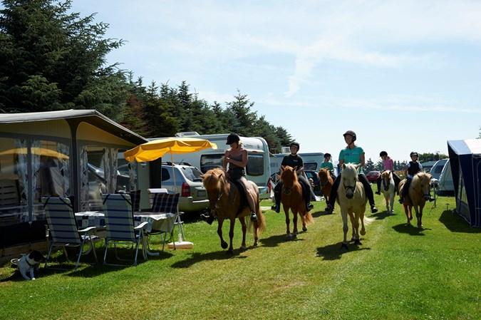 Heste på campingpladsen